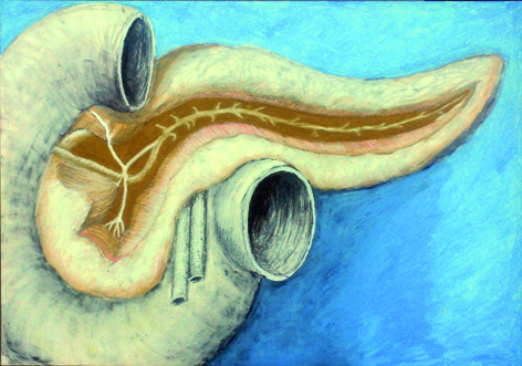 anatomisch